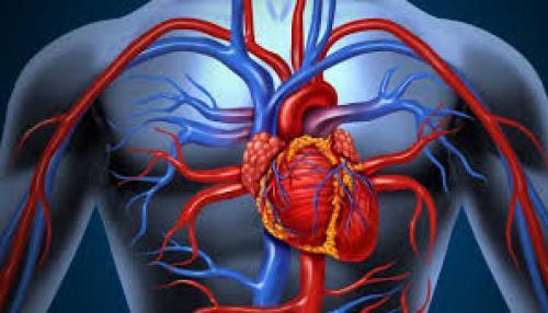 Kenali, Bagaimana Organ Tubuh Kita Bekerja dan Masalahnya